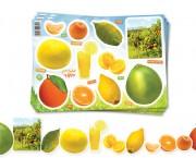 מגזרות פירות הדר – 36 ילדים
