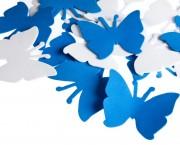 פרפר סול כחול לבן