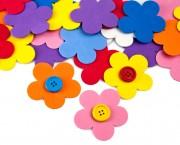 פרח סול בינוני 2