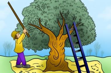עץ זית איור צבוע (Small)