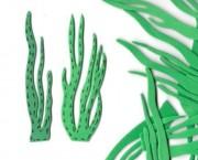 צמחי ים
